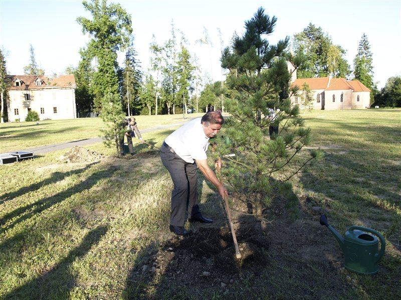 V radenskem parku so zasadili prva tri drevesa.
