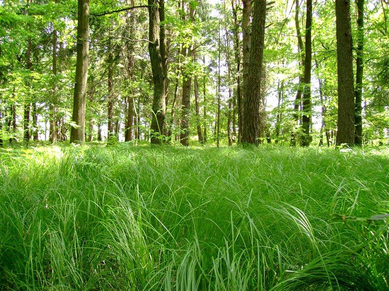 Miklavški gozd