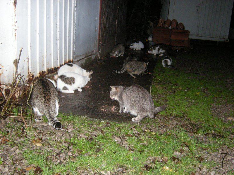 V naši okolici je ogromno zapuščenih in lačnih mačk!