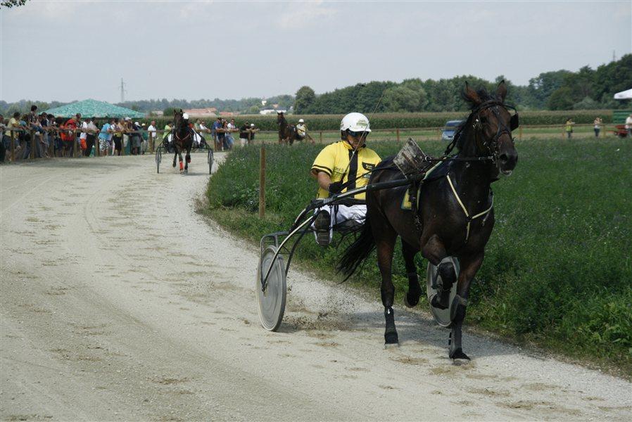 Kasaške dirke v Križevcih pri Ljutomeru.
