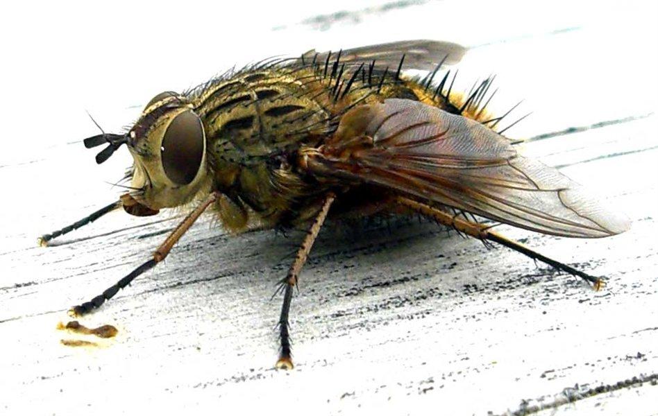 Prijavimo tudi poginule muhe?