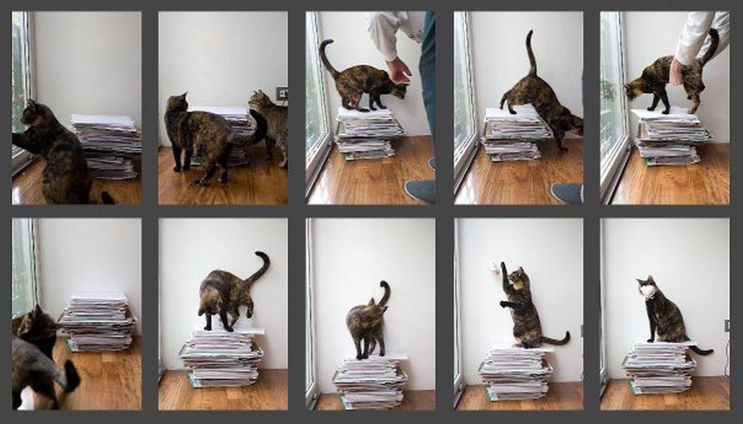 zbiranje papirja