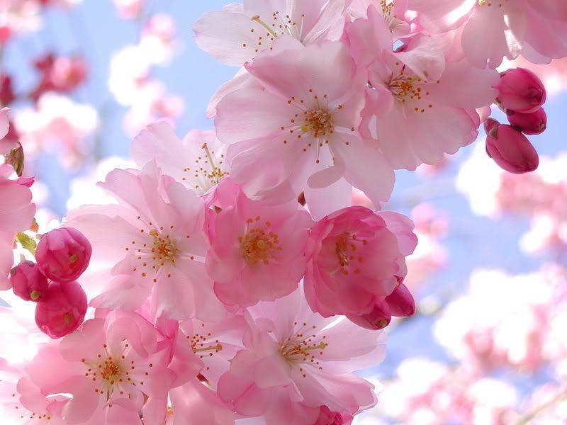 Prebujanje pomladi