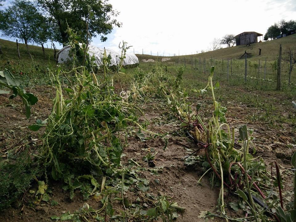Ekipe ocenjujejo škodo po ponedeljkovem neurju.
