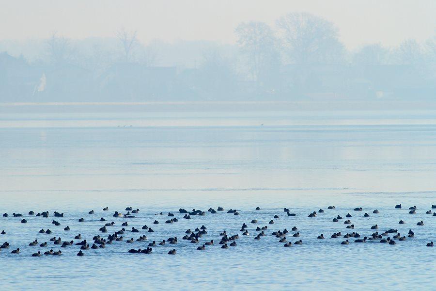 Ptujsko jezero je po mnogih letih zaledenelo.
