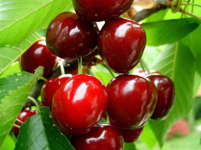 Večina Bricev svoje sadeže prodaja kar ob cesti