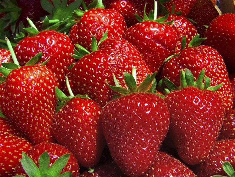 Tudi v Fructalu potrdili, da so začeli preverjati različne možnosti in pripravljenost sadjarjev za gojenje jagod. Za predelavo v sadne sokove v trenutno namreč ne uporabljajo svežih jagod, pač pa jagodno kašo iz Španije.