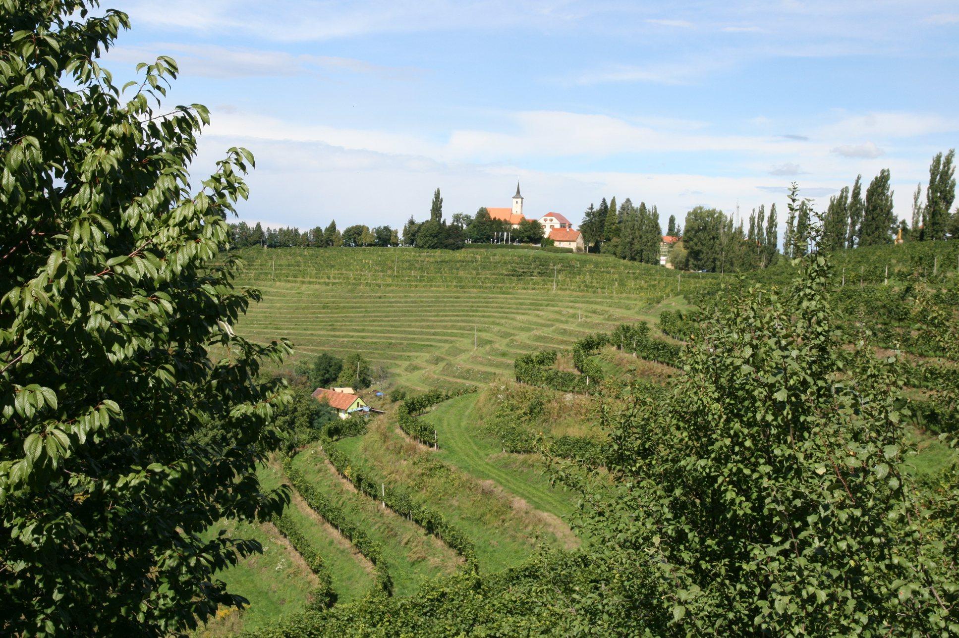 Čeprav je grozdja manj, so vinarji zadovoljni s kvaliteto
