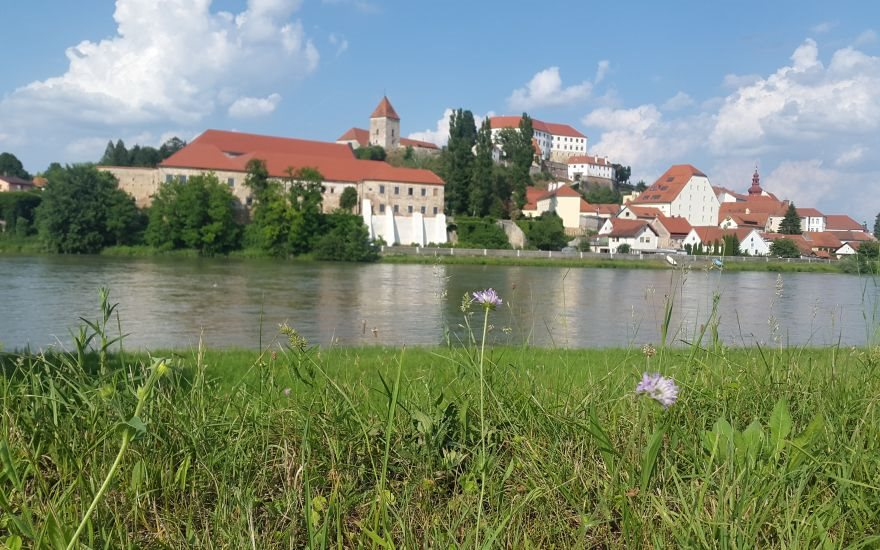 Mestna občina Ptuj je želela narediti celovit popis drevesnega fonda v mestu Ptuj.